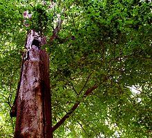 Grumpy old tree!  by Earl McCall