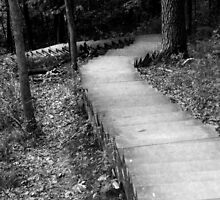 Wooded Descent by SongbirdBreid