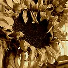 Dying Sunflower  by Andy Duffus