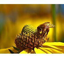 Honey Bee Gold Photographic Print