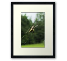 Golden Orb/Garden Spider on Web Framed Print