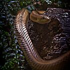 Snake in Ferns by carlhirst