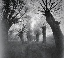 Willows by Prezi