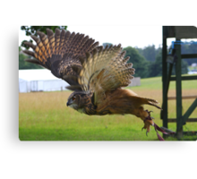 Eurasian Eagle Owl In Flight Canvas Print