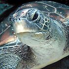 Green Turtle Eye by gardenofbeeden
