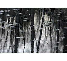 Lily Pads And Tree Reflections Photographic Print