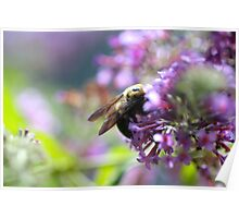 Bumblebee In Flowers Poster