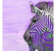 Zebra Abstract Purple Photographic Print