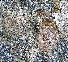 Rock Dwellers by HELUA