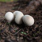 A cuddle of mushrooms by myraj