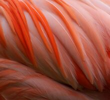 Flamingo abstract....... by jdmphotography