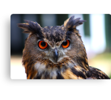 Eurasian Eagle Owl Portrait..... Canvas Print