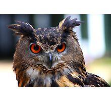 Eurasian Eagle Owl Portrait..... Photographic Print