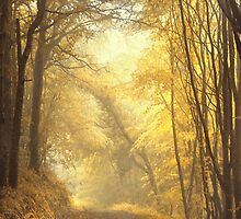 Beautiful Fall by Evelina Kremsdorf