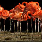 Flock of Flamingos by Nikki Collier