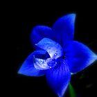 Blue Radiance by shelbu94