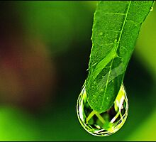 Nature's Crystal by Angel Warda