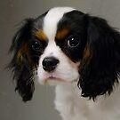 Sweet Little Puppy  by Lolabud