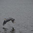 Blue Heron 3 by Jeff Ashworth & Pat DeLeenheer