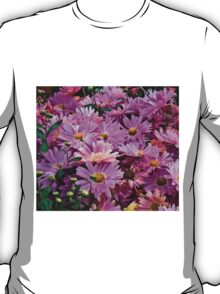 Pink Asters 3 T-Shirt