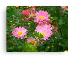 Pink Asters 4 Canvas Print