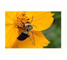 Bumble Bee at Work Art Print