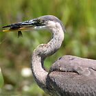 Heron with Sunfish by main1