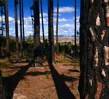 Last trees standing  by Geraldine Lefoe