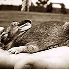 Baby Bunny by hcromer