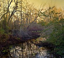 Morning Rise by John Rivera