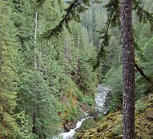 Nooksack River by JasonW