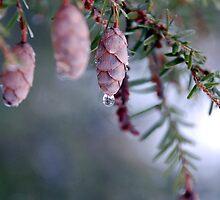 Nature's Diamond by Debbie Stobbart