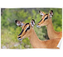 Black Faced Impala - Together in Curiosity Poster