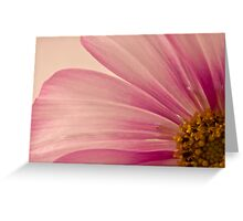 Pink Cosmo Macro  Greeting Card