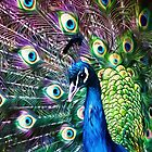 Peacock With Pizazz by Susie Peek