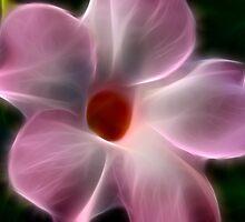 Pink Sparkle by Deborah  Benoit