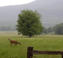 A Quiet Evening in Cades Cove by AnnTheArtist