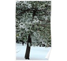 Frosted Pine dedicated to finding winter beauty Poster