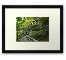 Along a trail at Mill Creek Park Framed Print