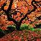 Patterns in Autumn
