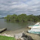 Mangroves & Old Dinghies! 'Karuah', Nelson Bay lake, Cent. N.S.W. by Rita Blom