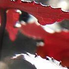 Sweet Gum Leaves in Sunlight I by Nadia Korths