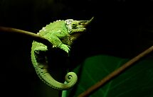 ~C is for Cranky Chameleon~ by a~m .