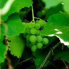 Green Grapes by GesturesPhoto