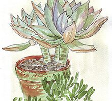 """Graptoveria """"Fred Ives"""" by Maree  Clarkson"""
