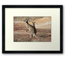 Kangaroos - White Cliffs Framed Print
