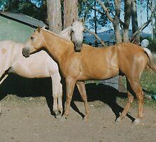 My Golden Boys by louisegreen