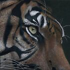 tiger face colour pencil by Rasberry6