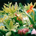 flowers by beebite