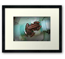 Froggies Chillin Framed Print